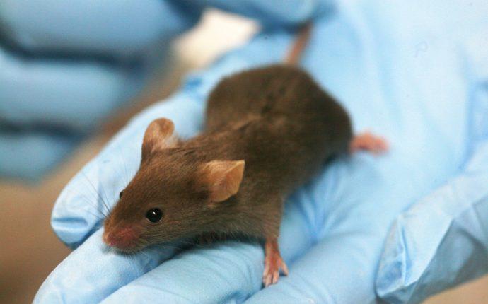 Utilização de animais em pesquisas: breve revisão da legislação no Brasil