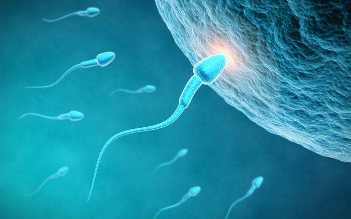 Curar ou criar pessoas: caminhos reprodutivos distintos ou similares?