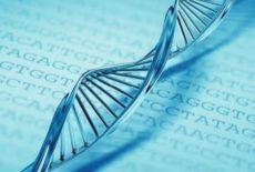 Contribuição da bioética de intervenção à releitura do conceito de princípio